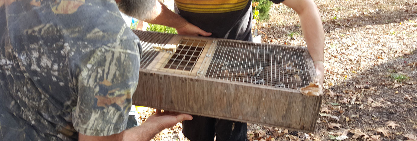 Quail being carried in a shallow wood box
