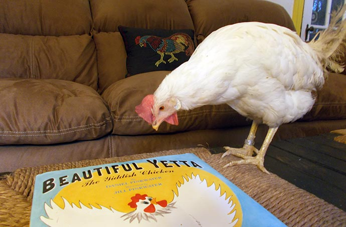 Miss Earth Angel examines the drawing of a hen on the cover of Beautiful Yetta.