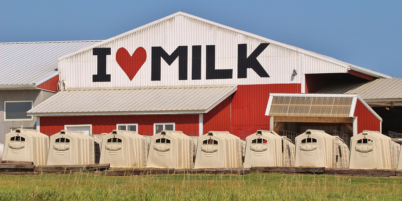 Dairy with 'I Love Milk' sign in the background, veal crates in the foreground.