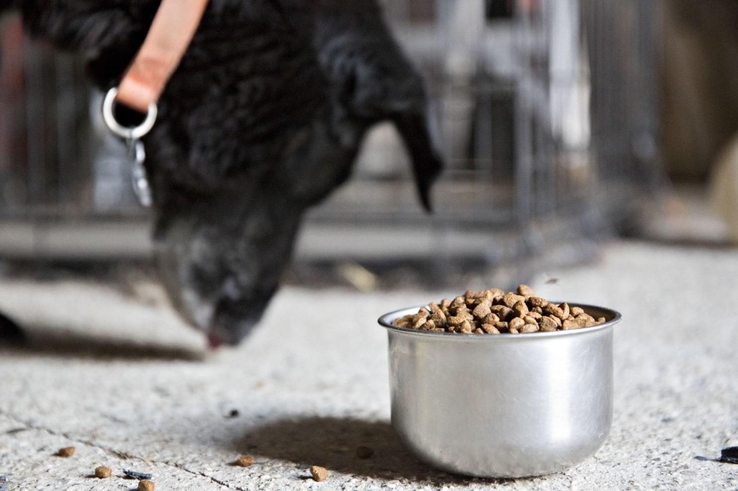 Dog eating 'dog food'
