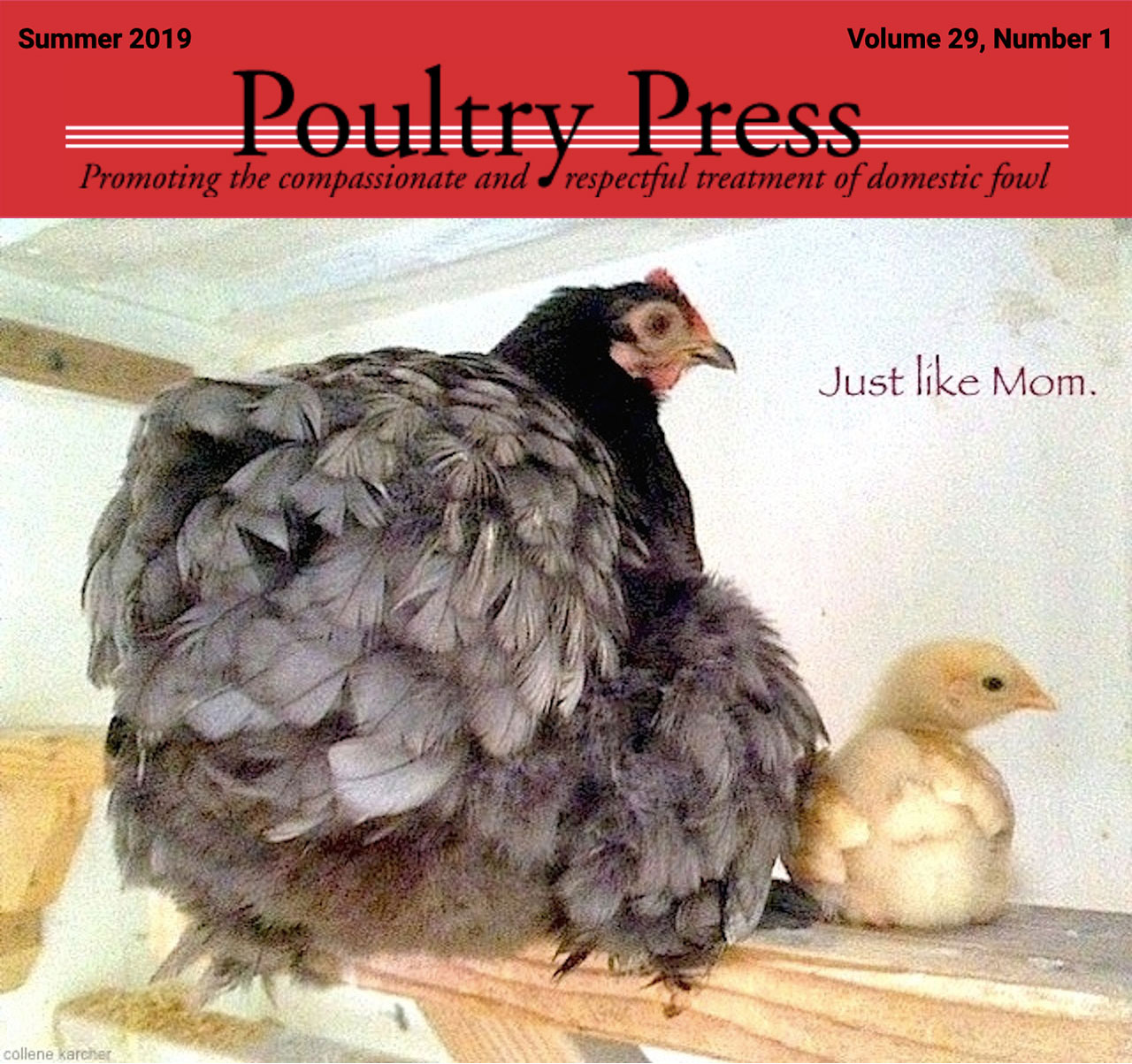 Summer 2019 Poultry Press