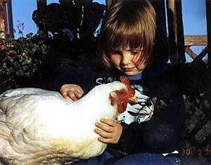 Chickens - UPC