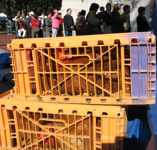 Foreground: chickens in crates. Background: people standing in line at the market.