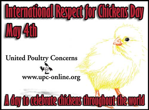 International Respect for Chickens poster