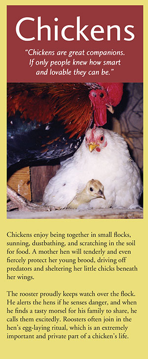 chickens brochure