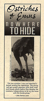 ostriches and emus: nowhere to hide