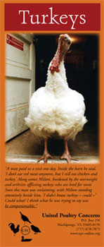 turkeys brochure