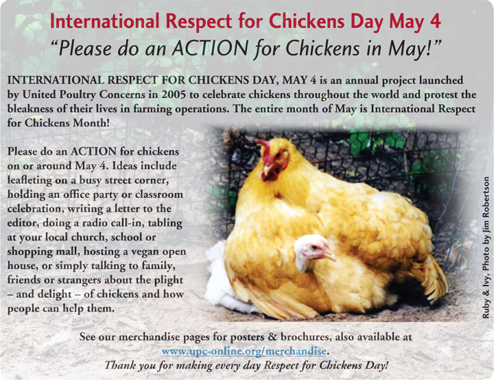 International Respect for Chickens Day poster: Please do an action for chickens in May!