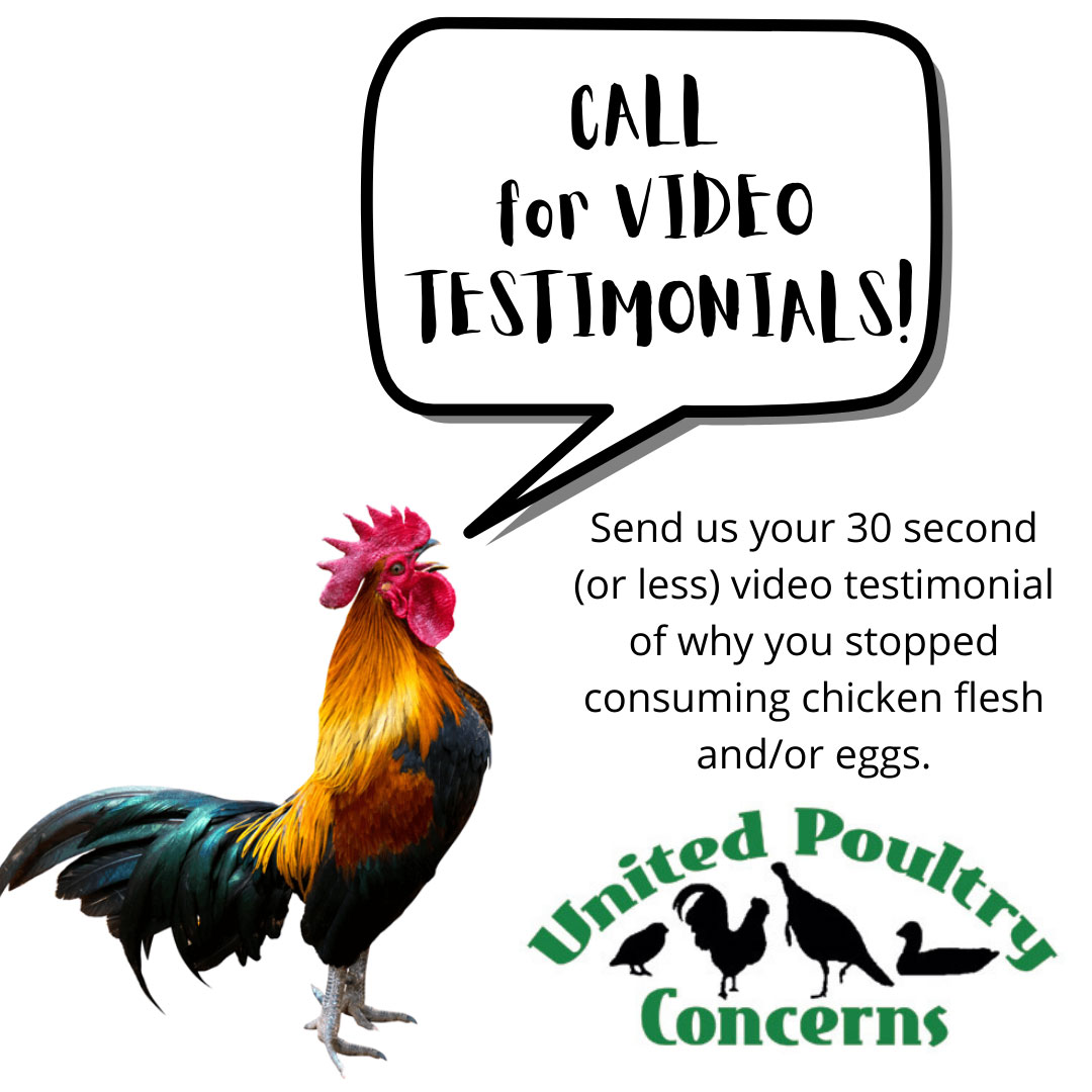 Rooster crowing: Call for video testimonials!