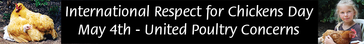 International Respect for Chickens Day banner