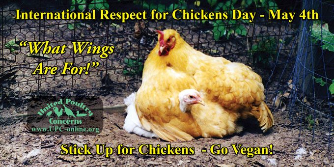 International Respect For Chickens Day - May 4th