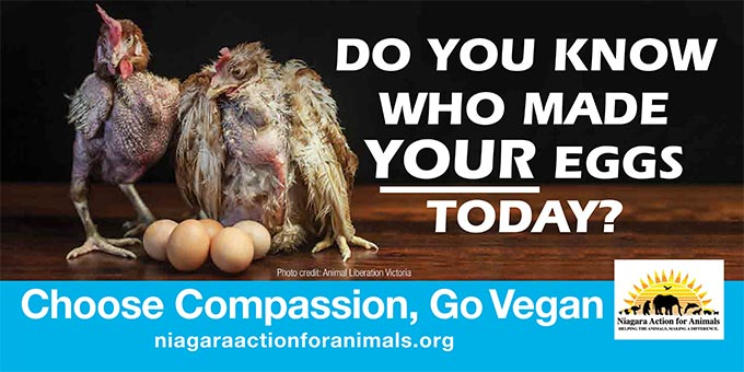 Niagara Action for Animals billboard