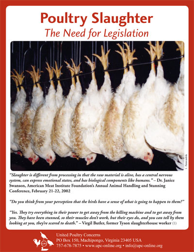 Awe Inspiring Poultry Slaughter United Poultry Concerns Download Free Architecture Designs Rallybritishbridgeorg