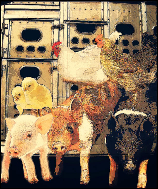 Collage of chickens and pigs in front of a transport truck