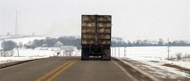 Semi truck driving across snowy landscape with turkeys in exposed cages.