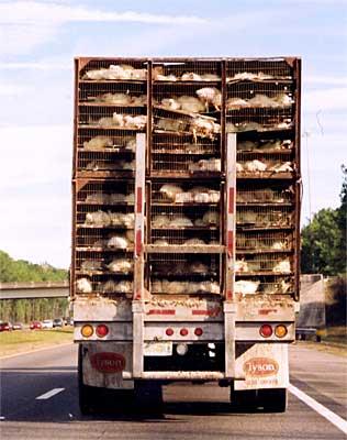 Transport United Poultry Concerns